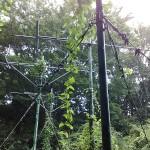 緑のアンテナ