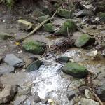 山口コース(1)の水辺