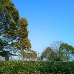 霞ヶ浦総合公園のランニングコースから見た風車